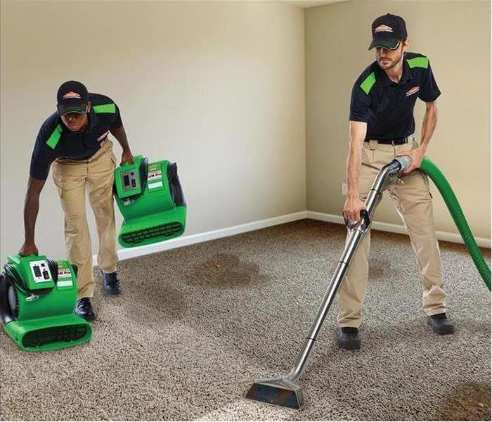 mold-clean-up