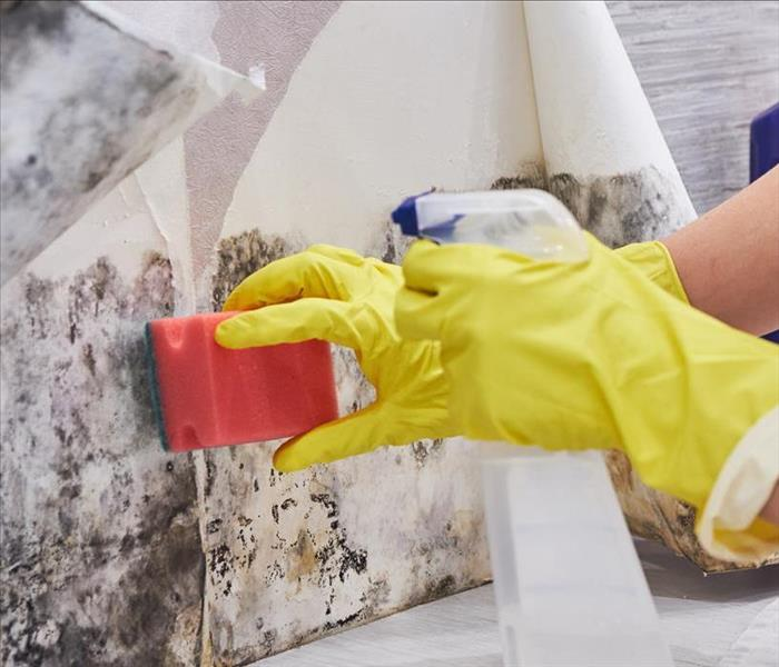 Image of a person cleaning up mold on white wall.