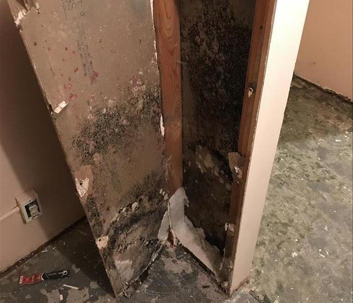 Mold Remediation Follow Mold Safety Tips If you Suspect Mold