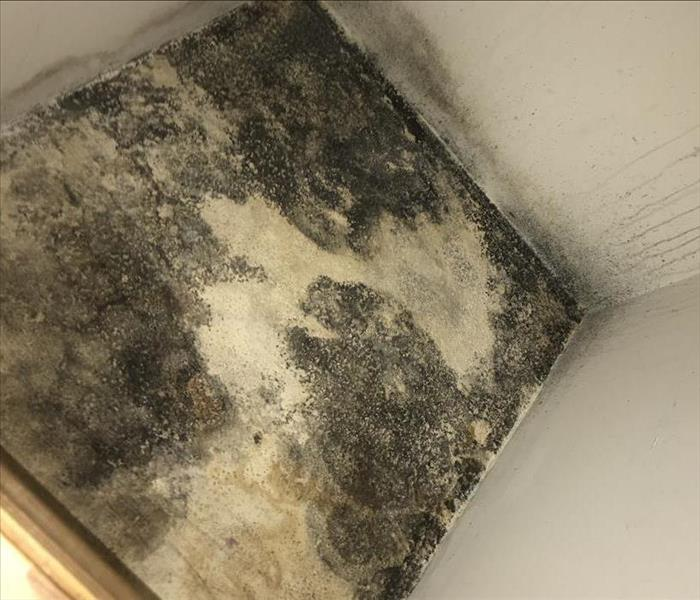 Mold Remediation MOLD – Just follow your Nose!